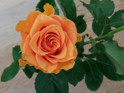 Ruusu sinulle