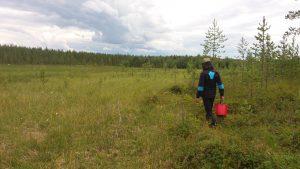 Read more about the article Menkää työttömät marjaan